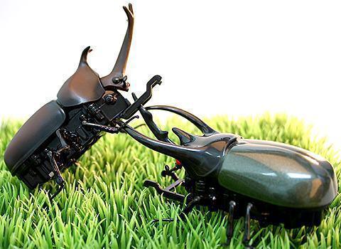 beetlebattle.jpg