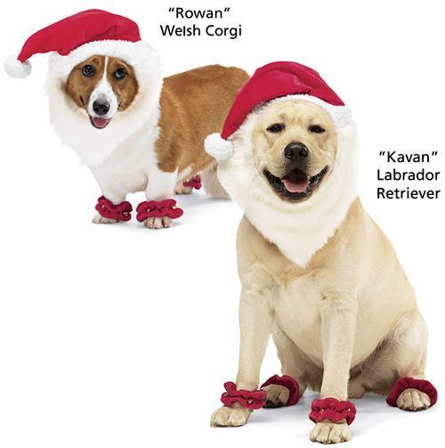 santa-dog-suit