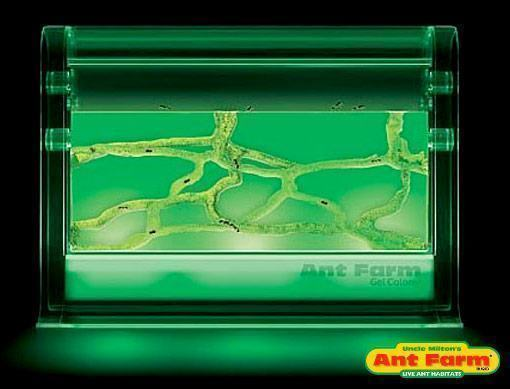 illuminated-ant-farm-01