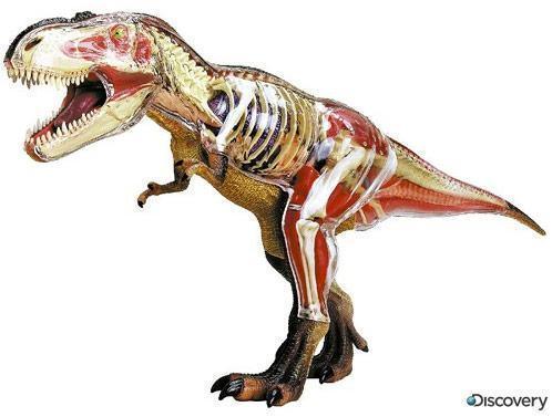 4D-Tyrannosaurus-rex-Puzzle
