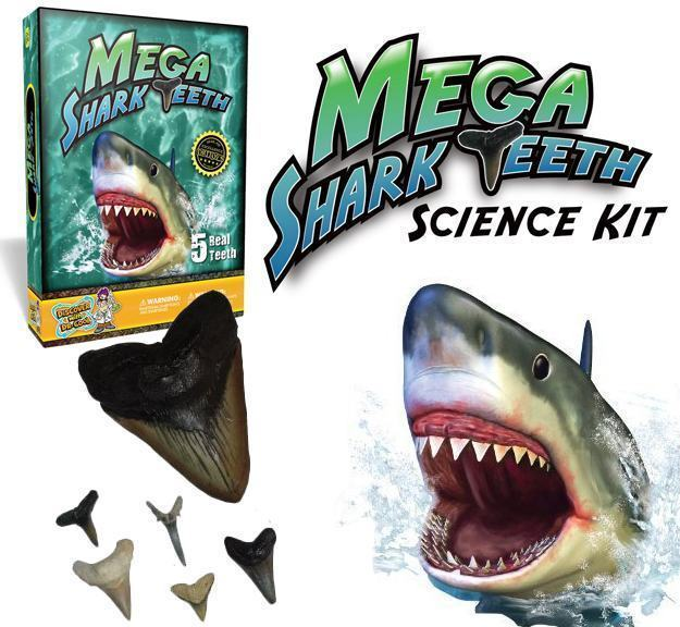 Mega-Shark-Teeth-Science-Kit-01