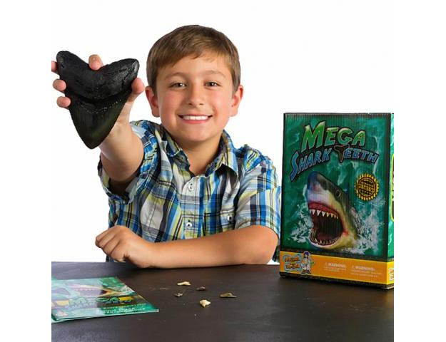 Mega-Shark-Teeth-Science-Kit-03