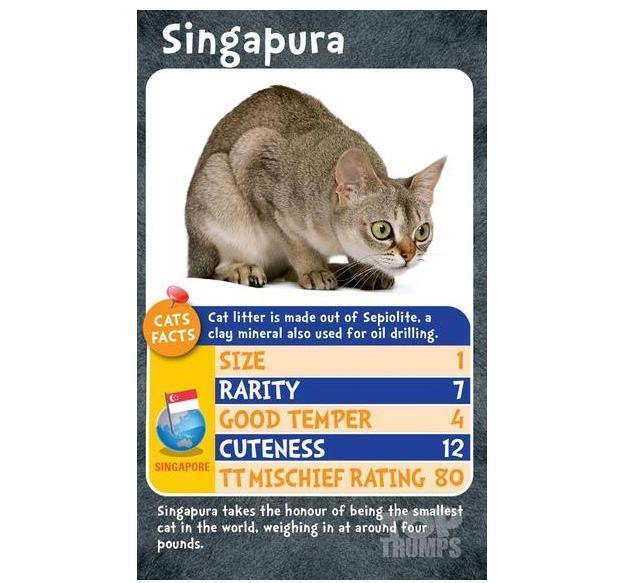 Super-Trunfo-Gatos-Top-Trumps-Cats-04