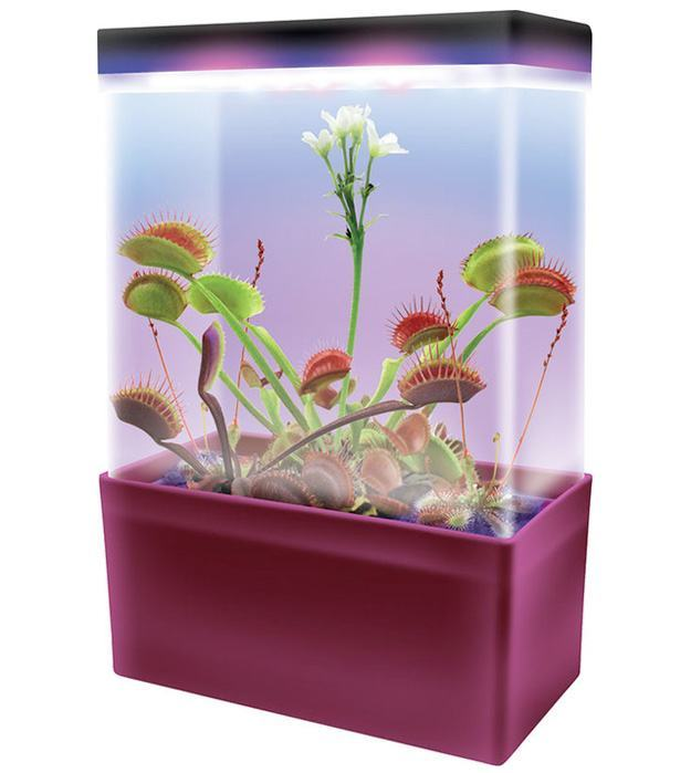 Carnivorous-Creatures-Light-Box-Kit-Plantas-Carnivoras-02