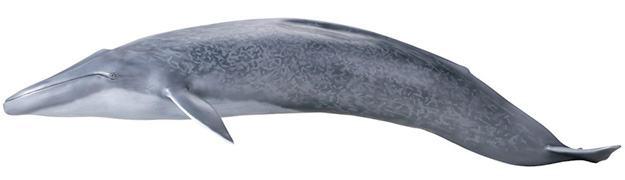 Baleia-Azul-Blue-Whale-Mega-Sofubi-Advance-02