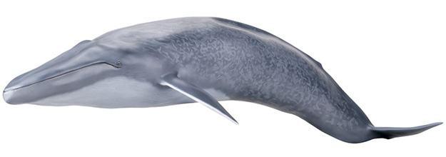 Baleia-Azul-Blue-Whale-Mega-Sofubi-Advance-07