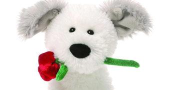 Demarco, o Cãozinho com Rosa de Pelúcia Valentine's Day (Dia dos Namorados)