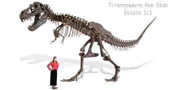 Esqueleto do Tiranossauro Stan em Tamanho Real com 4,5 Metros de Altura por 100 Mil Dólares!