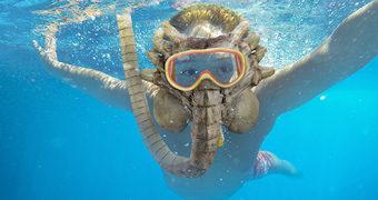 Máscara de Mergulho com Snorkel Alien Facehugger